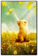 सूर्य में बिल्ली का बच्चा