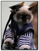 Cat Sailor