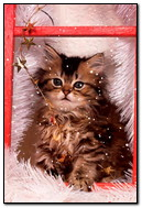 Kucing Di Luar Salji Tingkap