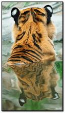 bagno di tigre