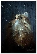 Il vetro bagnato del gatto