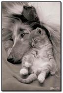 Śpiąca para