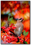 Autumn Bird