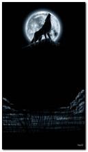 Wolfs Night