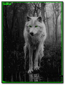 Lobo Verde