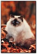 Осінній кот