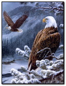 Eagle In The Mountains In Winter