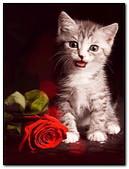 Romantic Cat