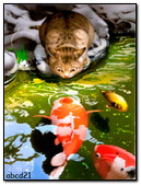 The Cat Is Watching The Fish