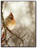 Bird In The Snow