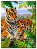 Couples Tigers