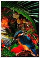 Oiseau tropical