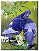 My Favorite Dove