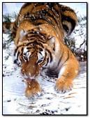Tiger At Snow