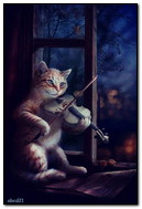Cat Memainkan The Violin By The Window