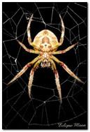 Araignée sur un Web