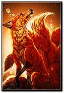 lửa cáo