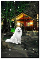 White Dog At Home