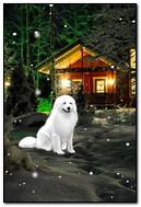 Anjing Putih Di Rumah