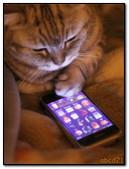 बिल्ली कॉल