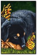 小狗和蝴蝶