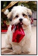 الكلب مع هدية