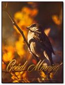 Bird (Good Morning)