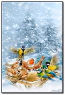 शीतकालीन पक्षियों