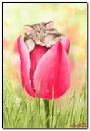 Cat Slep Within Tulip