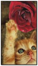 Kitten and Rose