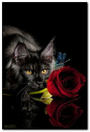 Cat And Red Rose
