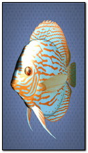 Blue Fish 360x640