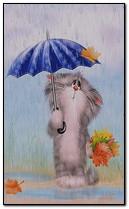 Gato en lluvia