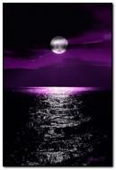 月亮星星之海