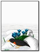 鸟和番红花