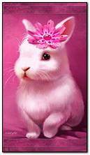 chú thỏ