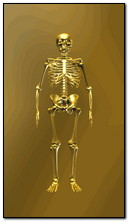 Gold Skeleton