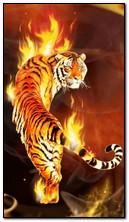 आग पर बाघ