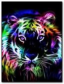 Colour Tiger