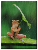 Funny Frog Hiding From Rain