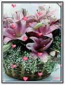 Flowers & Hearts