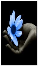 FLASHER ดอกไม้