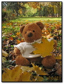 Teddy Bear In Autumn Park