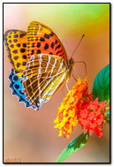 Bright Butterfly On A Flower