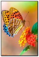 एक फूल पर उज्ज्वल तितली