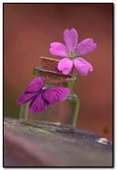Blume in der Flasche
