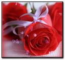 Rose e cuori