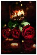 Hoa hồng trước lò sưởi