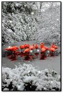 Flamingi w śnieżnym lesie