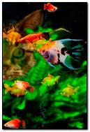 Acuario con pescado